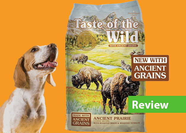 review dry food